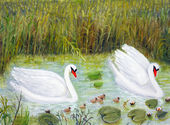 Two swans with their little ones — Stock Photo
