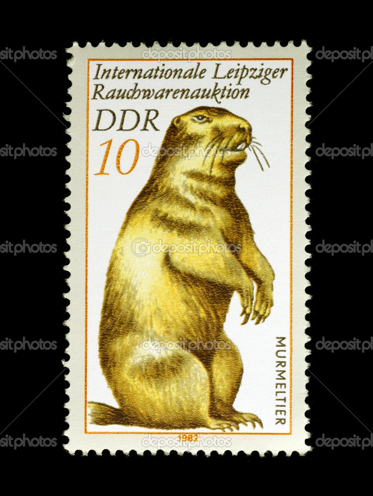 Marmot on stamp from East Germany isolated in black — Stock Photo #1424200