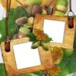 Autumn framework with acorns — Stock Photo
