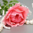 Pink rose — Stock Photo #1261849