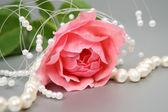 розовая роза — Стоковое фото