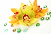 Yellow orchids — Stock Photo