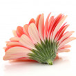 Pink flower — Stock Photo #1394853