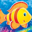 Coral fish — Stock Photo
