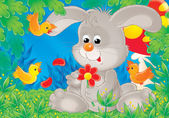 Grey bunny — Stock Photo