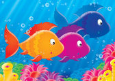 Shoal of colorful fishes — Stock Photo
