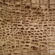 Royalty-Free Stock Photo: Snakeskin or crocodile texture