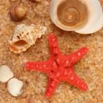 Starfish and cockleshells on seacoast — Stock Photo #1226598