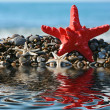 Starfish — Stock Photo