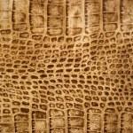 Snakeskin or crocodile texture — Stock Photo #1227647