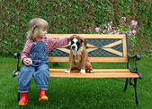 Little girl with the puppy of the boxer — Photo