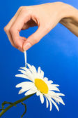 Camomile tell fortunes — Stock Photo