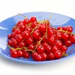 Red currant — Stock Photo #1233314
