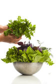 Fresh herbage — Stock Photo