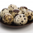 Quail egg — Stock Photo #1264557