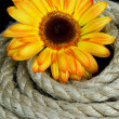 Royalty-Free Stock Photo: Yellow  flower and rope
