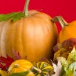 Autumn still life — Stockfoto #1292707