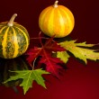 Autumn still life — Stockfoto #1295318