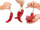 Peppers in hand isolated — Stock Photo