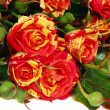 Orange roses — Stock Photo #1300728