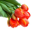 Tulips, detail of bunch, isolated — Stock Photo