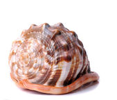 Shell on a white background — Stock Photo