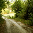 Road in Woods — Stock Photo #1217662
