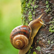 Stock Photo: Snail
