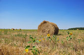 Field and Bales of Hay — Stock Photo