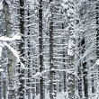 Winter wood — Stock Photo