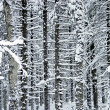 Stock Photo: Winter wood