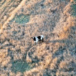 Cow standing in autumn grass — Stock Photo