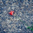 Stock Photo: Poppy flower on pavement