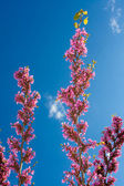 Wisteria in the sky — Stock Photo