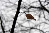 Last leaf — Stock Photo