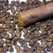 Cuban cigar on coffee beans — Stock Photo