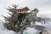 Bird house on pine tree — Stock Photo
