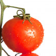 Stock Photo: Ripe tomato on green branch