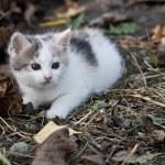 Kitten — Stock Photo