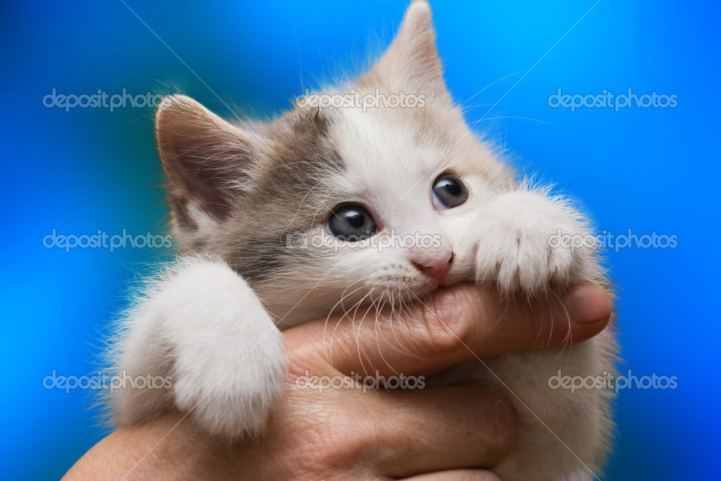 Cat kneading and biting