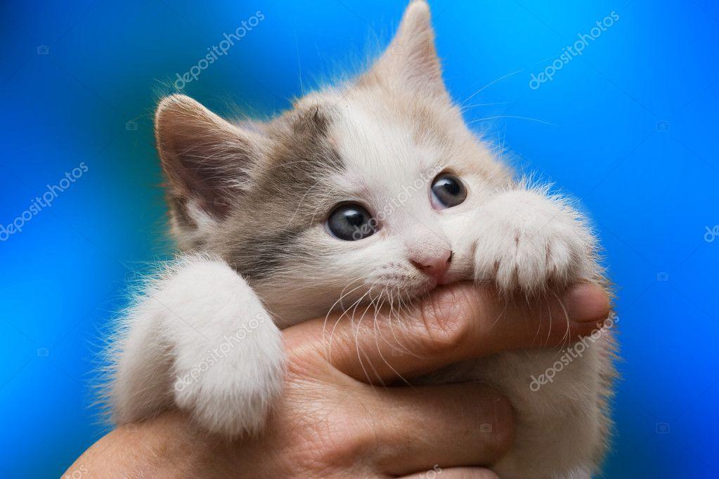 self cleaning cat litter box ebay