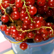 Currant — Stock Photo #1247533