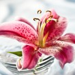 Lily, romantic mood — Stock Photo #1249960