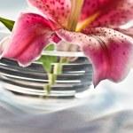 Lily, romantic mood — Stock Photo