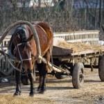 Horse — Stock Photo #1250467