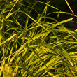 Native-grasses — Lizenzfreies Foto