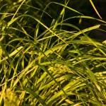 Native-grasses — Stock Photo