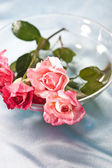 Roses for love — Stock Photo