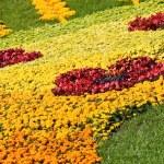 çizim çiçek — Stok fotoğraf