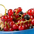 Currant — Stock Photo #1274335